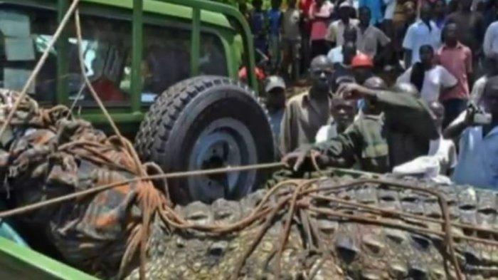 Ngeri, Buaya Sepanjang 5 Meter di Uganda Teror Warga Selama 14 Tahun, Sudah Mangsa 80 Orang