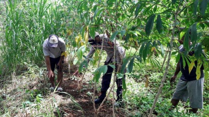 Pamit Cari Rumput, Seorang Kakek di Rongkop Ditemukan Tewas di Ladang