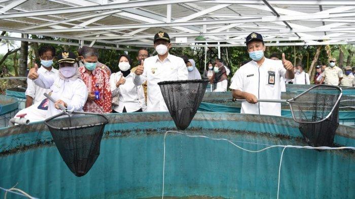 Budidaya Lele dengan Sistem Bioflok di Pakem Sleman Dinilai Lebih Menguntungkan