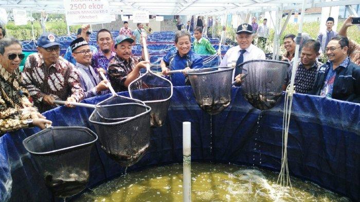 168 Pesantren Terima Bantuan Budidaya Ikan Lele Sistem Bioflok Tribun Jogja
