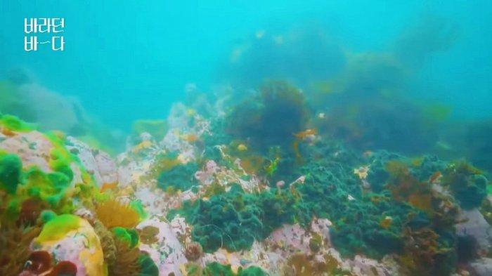 Pemandangan bawah laut di variety show Sea of Hope