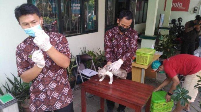Pemkot Gelar Vaksinasi Rabies Gratis, Khusus Hewan Peliharaan Domisili Kota Yogya