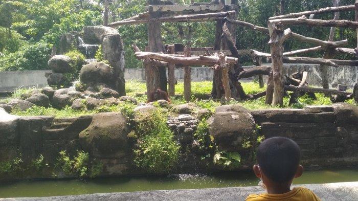Pengunjung menikmati liburan akhir pekan di Gembira Loka Zoo, Sabtu (31/10/2020).