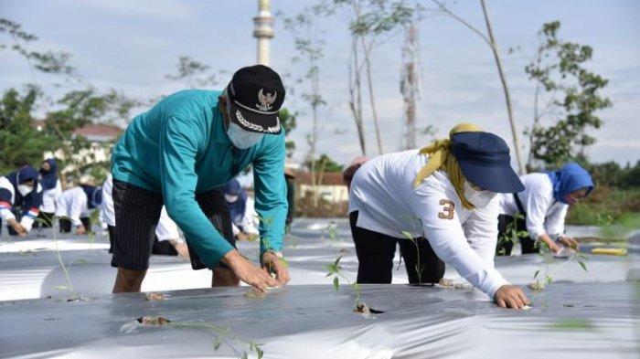 Pensiun dari Bupati Sleman, Sri Purnomo Ingin Fokus jadi Petani