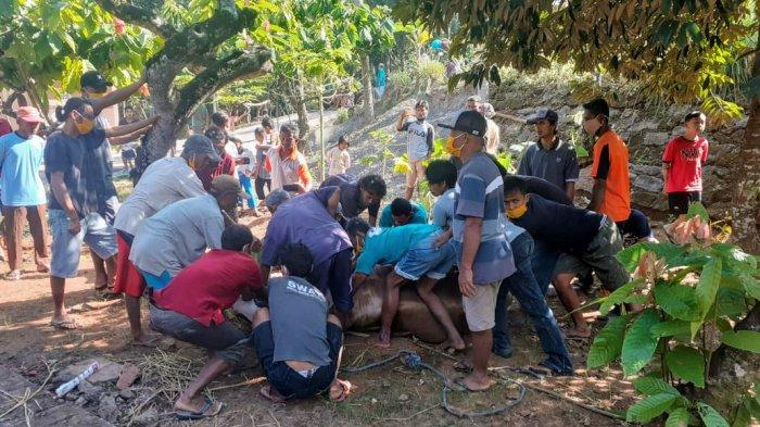 Tahun Ini, Lokasi Penyembelihan Hewan Kurban di Gunungkidul Turun Drastis