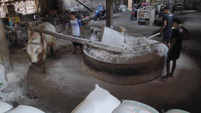 Pertahankan Cara Tradisional, Mie Lethek Cap Garuda Tetap Diproduksi dengan Tenaga Sapi