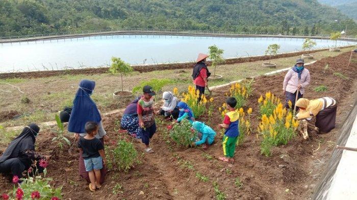 Pertanian Berbasis Kawasan Agrowisata Terus Dikembangkan di Kulon Progo