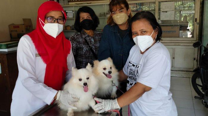 Ratusan Kucing dan Anjing di Kabupaten Klaten Terima Suntikan Vaksin Rabies