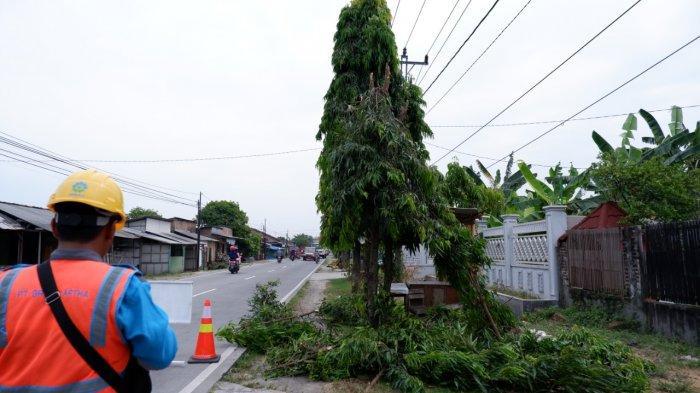 PLN Demak Lakukan Pemangkasan Pohon Tanpa Harus Padamkan Listrik