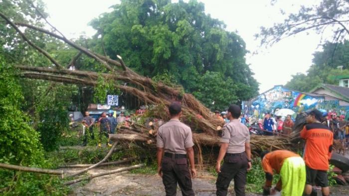 9 Orang Terluka dalam Insiden Pohon Tumbang di Gembira Loka