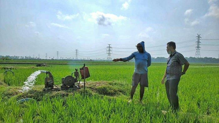 Petani di Grabag Terbantu Program Electrifying Agriculture Bentuk dari PLN