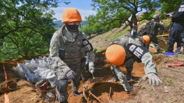 Proyek Penggalian DMZ Kembali Dilanjutkan Korea Selatan, Temukan Banyak Sisa-sisa Perang