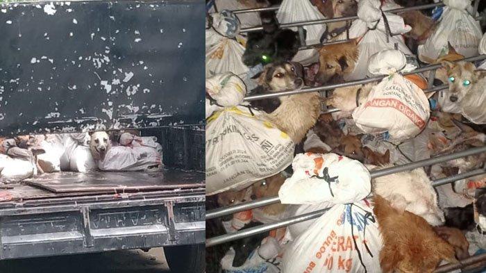 Puluhan Anjing Dibungkus Karung Diamankan Petugas Penyekatan Mudik Lebaran