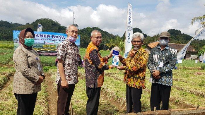 Peluncuran QRIS Pembayaran Non-tunai Bank BPD DIY Sekaligus Panen Bawang Merah di Nawungan
