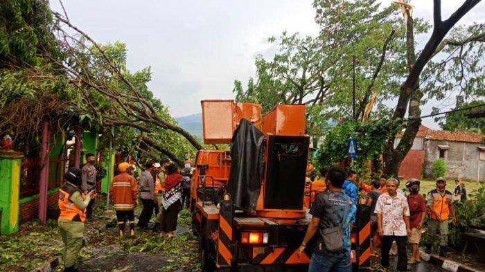 BREAKING NEWS : Puluhan Pohon di Kota Magelang Tumbang, Diterjang Angin Kencang