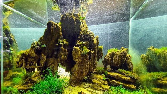 Mengenal Aquascape, Seni Membuat Ekosistem Mini dalam Akuarium