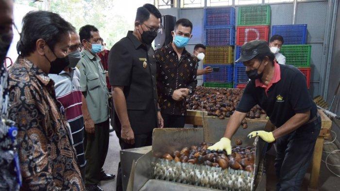 Salak Pondoh asal Sleman Diekspor hingga Kamboja