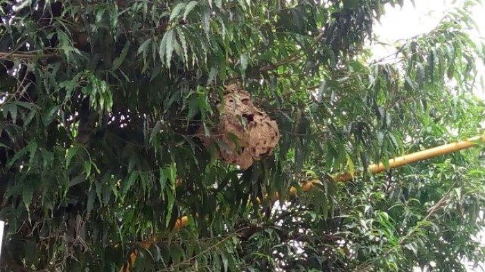 Kawanan Tawon Serang Sebagian Pengguna Jalan di Purwokerto, Begini yang Terjadi