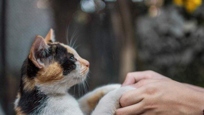 Seekor kucing bersama seorang penduduk di Kota Kafr Nabl Suriah. Di kota ini, jumlah kucing lebih banyak daripada manusia.