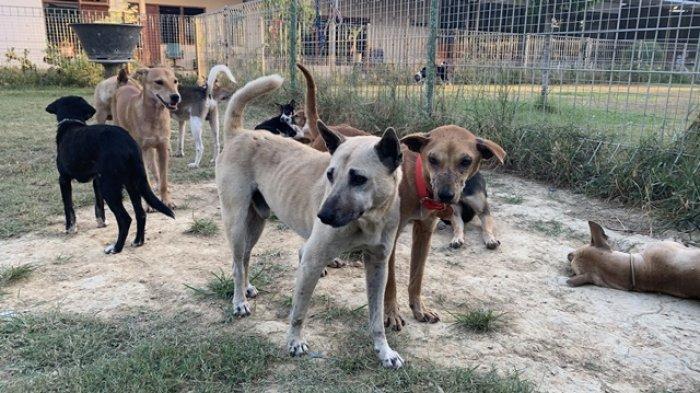 Sejumlah anjing yang gagal diselundupkan dari Garut ke Solo, Kamis (6/5/2021) lalu saat ini sudah berada di shelter RRDC di Gamping, Sleman.