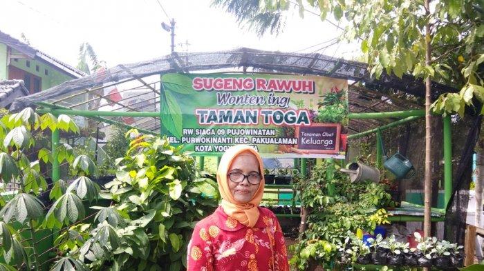 Kelurahan Purwokinanti Budidayakan Tanaman Toga Jahe Merah Tribun Jogja