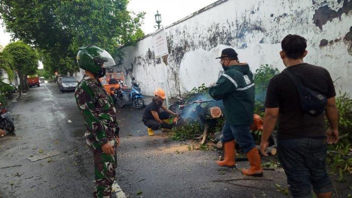 Dampak Hujan Lebat dan Angin Kencang di DI Yogyakarta, Sebabkan Pohon Tumbang hingga Bangunan Rusak