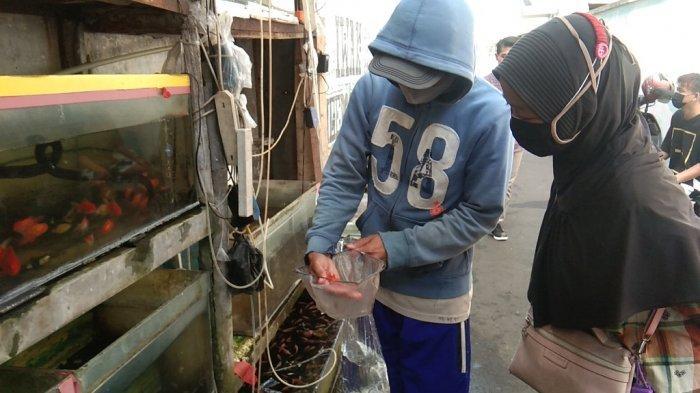 Oksigen Isi Ulang Langka, Penjual Ikan Hias di Klaten Ikut Terdampak