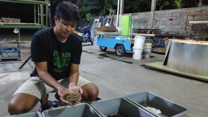 Setelah Bangkrut Beternak Bebek, Warga Bantul Sukses Budidaya Maggot untuk Pakan Alternatif Ternak