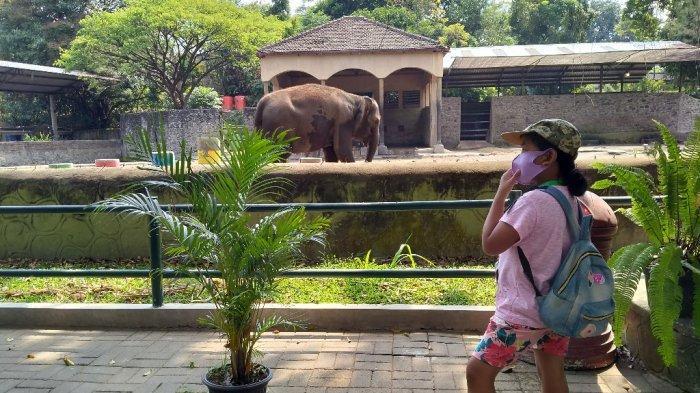 Ilustrasi : Suasana GL Zoo