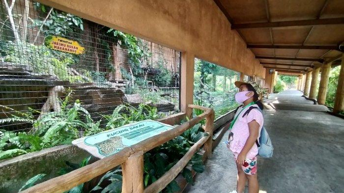 Ini Syarat Berkunjung ke Kebun Binatang Gembira Loka  dan Ini Harga Tiket Kunjungan ke GL Zoo