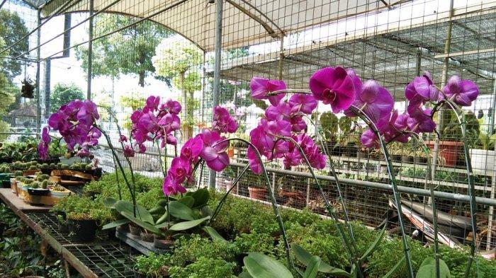 Suasana satu kios tanaman hias di Jalan Soeradji Tirtonegoro, Tegalyoso, Klaten Selatan, Klaten, Rabu (9/9/2020).