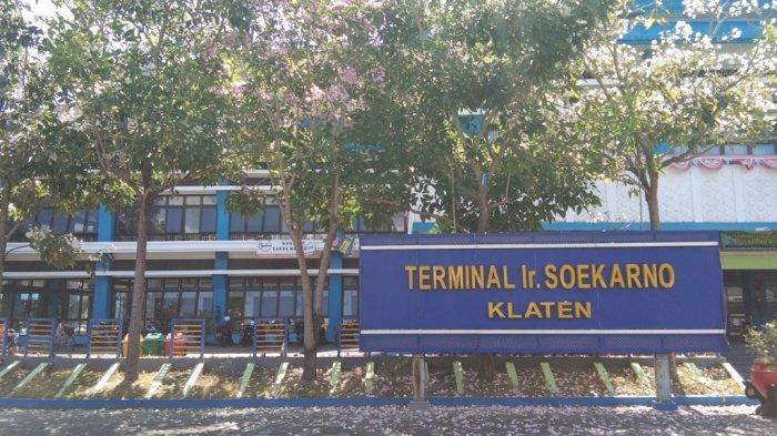 Bunga Tabebuya Bermekaran, Terminal Ir Soekarno Klaten Tampak Mempesona