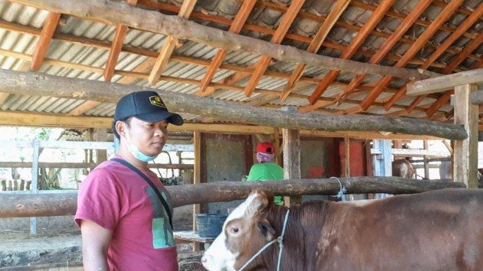 Tak Ingin Merugi, Pedagang di Gunungkidul Pilih Kurangi Stok Hewan Kurban Iduladha