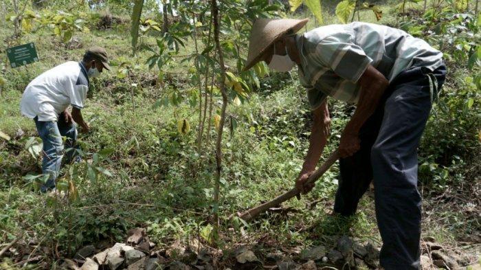 Taman Keanekaragaman Hayati Eroniti untuk Penyelamatan Spesies Asli di Gunungkidul