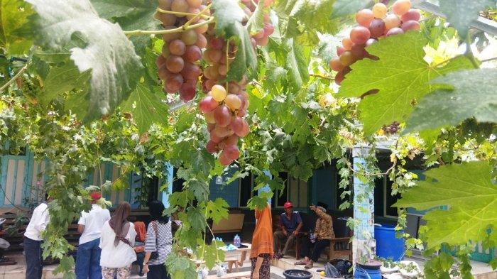 Wisata Kebun Anggur Bantul