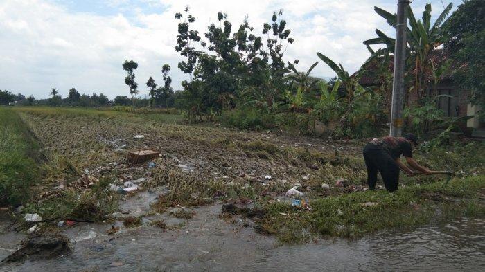 Akibat Diterjang Banjir 119 Hektare Tanaman Padi di Klaten Mengalami Puso
