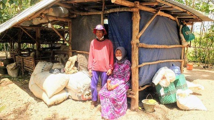Ngadiono dan Keluarga Tinggal di Kandang Sapi Gegara Utang