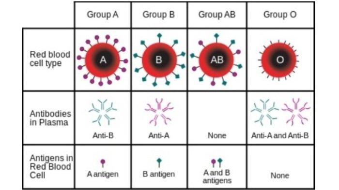 Deretan Penyakit yang Mengintai Pemilik Golongan Darah O