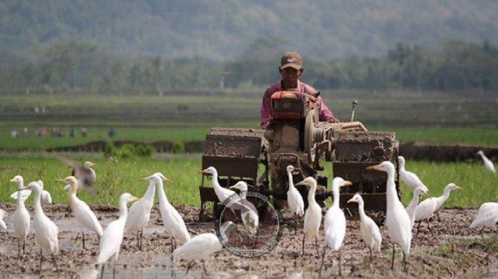 TRIBUNJOGJAWIKI : Desa Wisata Ketingan