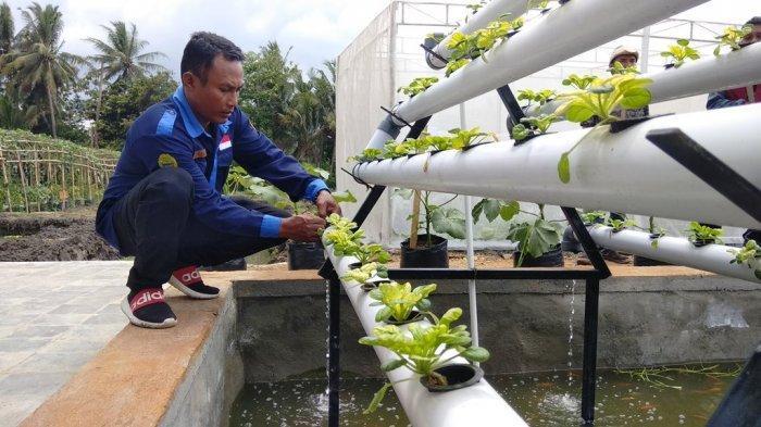 Melihat Jogja Youth Farming, Agrowisata yang Dikelola Anak-anak Muda