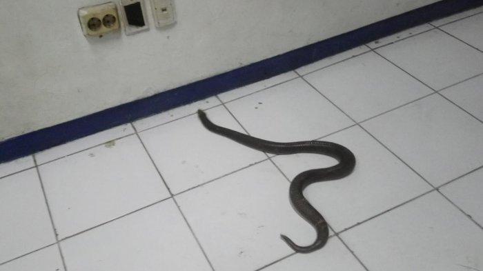 Perhatikan, Inilah Tanda-tanda Jika Ada Ular Bersembunyi di Dalam Rumah Anda
