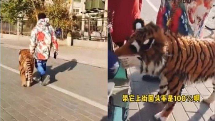 VIDEO VIRAL 'Harimau' Diajak Jalan-jalan sang Pemilik, Ini Faktanya