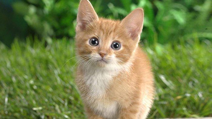 Viral Video 3 Perempuan Injak Injak Anak Kucing Sampai Mati Terungkap Lokasi Dan Motif Pelaku Tribun Jogja