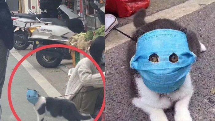 Viral Foto Menggemaskan Kucing Pakai Masker di Tengah Wabah Virus Corona, Diajak Pemilik Jalan-jalan