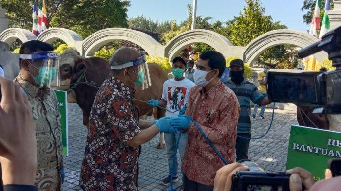 Dua Sapi Presiden Jokowi untuk Gedong Agung dan Warga Kulonprogo
