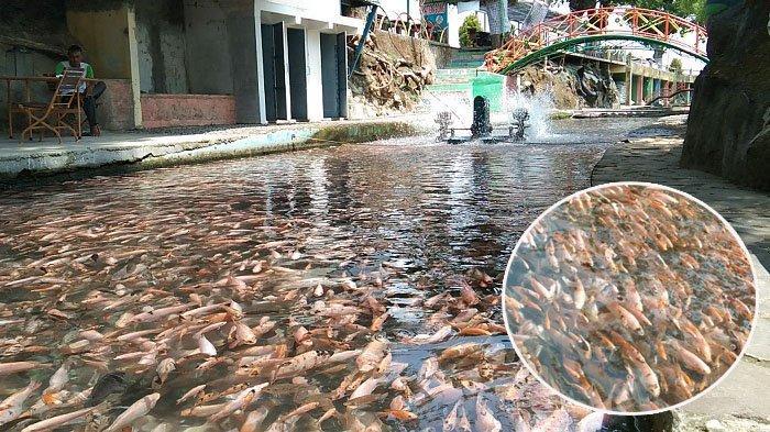 Watergong Klaten Dulunya Sungai Penuh Sampah Kini Isinya Jutaan Ikan