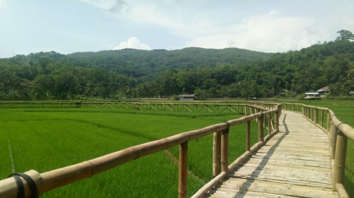 Sukorame Miliki Potensi Wisata Menikmati Pematang Sawah Dengan Cara Berbeda