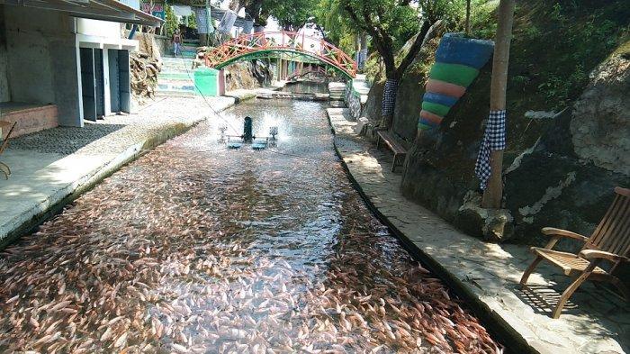 Suasana sungai di objek wisata Watergong yang penuhi jutaan ikan nila dan koi yang berada di Dukuh Pusur, Desa Karanglo, Kecamatan Polanharjo, Kabupaten Klaten, Jumat (23/10/2020).