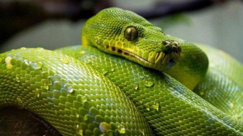 arti-mimpi-ular-02082021.jpg