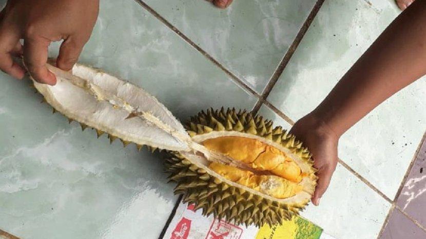 mengenal-kencono-rukmi-buah-khas-gunungkidul-yang-mirip-durian.jpg